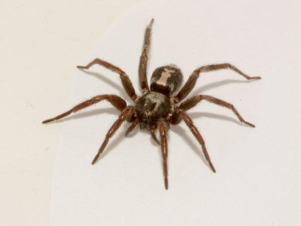 spider in basement ontario small jpg