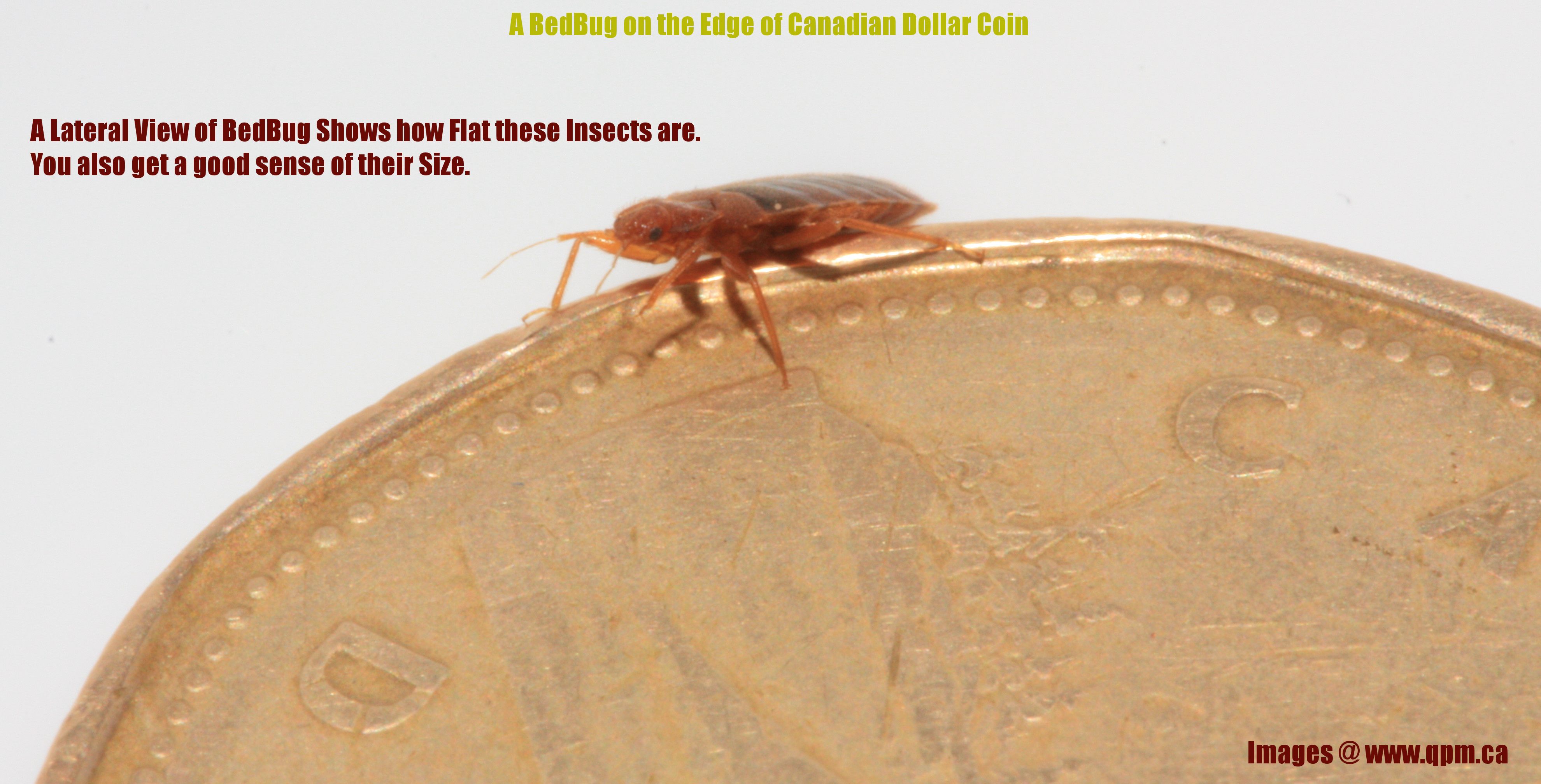 will bed bugs die in the cold
